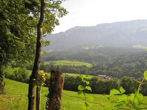vue sur sentier des arbres